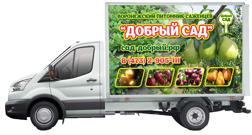 Воронежский плодово-ягодный питомник | Саженцы мичуринской селекции